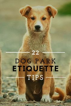 We've had some embarrassing moments at the dog park in the past! Here's a list of 22 tips summarising the dos and donts of dog park etiquette.