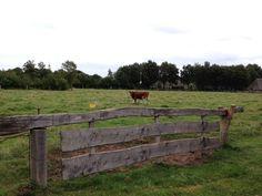 Het hek van het koeienpad