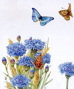 Cornflowers and butterflies from Marjolein Bastin notebook, scanned by MarquiseLem