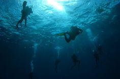 Diving in Cozumel, MX