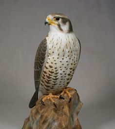 15 inch Prairie Falcon Hand Carved Wooden Bird by jjstudio on Etsy