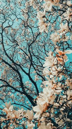 Wallpaper - Hd photo collection of the most beautiful nature ( FL my account Hạnh Lee to s. Wallpaper - Hd photo collection of the most beautiful nature ( FL my account Hạnh Lee to s. Tumblr Wallpaper, Nature Wallpaper, Screen Wallpaper, Spring Wallpaper, Hd Flower Wallpaper, Wallpapers Of Nature, Van Gogh Wallpaper, Beautiful Wallpaper For Phone, Qhd Wallpaper