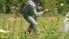 Afl.: Vlinders. Maurice probeert vlinders te vangen in het bos, maar dat valt niet mee. Hij roept de hulp in van Annette van de Vlinderstichting. Zij maakt filmopnamen van vlinders en weet dan ook precies waar ze in het bos te vinden zijn. Verder ontdekt Maurice dat vlinders bijzondere dieren zijn, want het zijn eerst rupsen! Hoe verandert een rups in een vlinder? Maurice legt het uit met een slaapzak en een Elvis Presleypak!