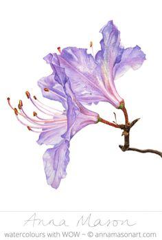 """Rododendro © 2007 ~ ~ annamasonart.com 23 x 31 cm (9 """"x 12"""")"""
