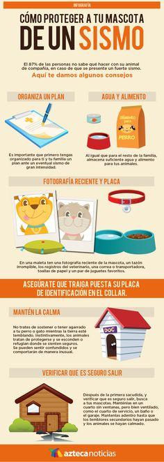 Cómo proteger a tu mascota de un sismo #infografia