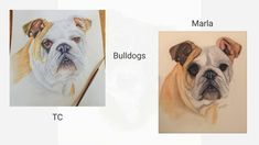 I'd like to share with you some wonderful watercolor paintings created by members of our online school. Pet Dogs, Pets, Step By Step Painting, Learn To Paint, Artist At Work, Pet Portraits, Watercolor Paintings, Wildlife, Rhodes