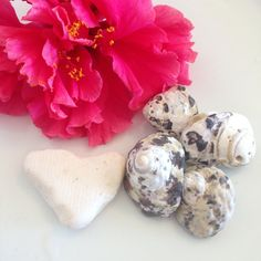Milk Heart Sea Glass Bulk Seashell Sea Shells Heart by AmorNtheBox