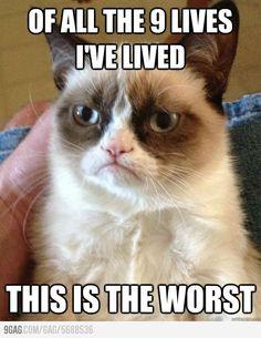 Grumpy cat on living