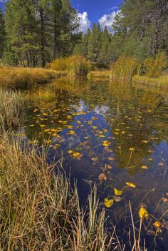 Pond at Sycamore Canyon by Sue Cullumber on Capture My Arizona // Sycamore Canyon wilderness area outside of Flagstaff, Az.