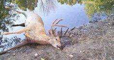 I'd hate to be next to him. He's about to pop! Deer Diseases 101: What You Need to Know