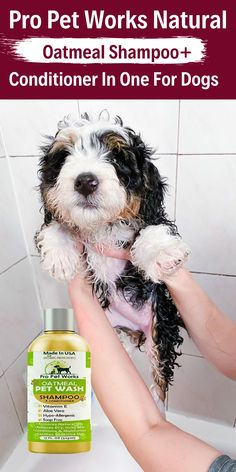 Our Oatmeal Dog Shampoo And Conditioner is recommended by Vets and Specially formulated for pets with allergies to food, grass and flea bites. #dogshampoo #dogshampooplusconditioner #dogconditioner Oatmeal Shampoo, Cat Shampoo, Shampoo And Conditioner, Dog Smells, Natural Vitamin E, Flea Treatment, Antioxidant Vitamins, Dog Eyes, Aloe Vera Gel