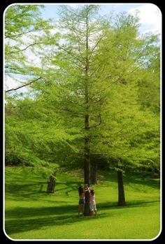 Tree Identification for Kids: make a neighborhood tree guide. Great activity for arbor day, Earth Day, for scouts...