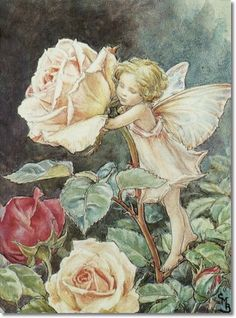 ☸Cicely Mary Barker - Flower Fairies of the Summer - The Rose Fairy