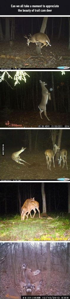Sad part is it true, and I see a lot weirder and retarded deer then that