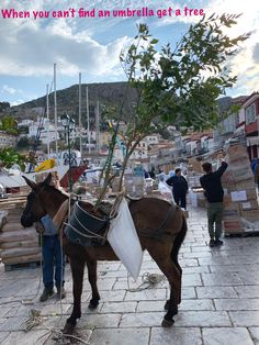 Hydra , amazing place , no cars just donkeys and millions cats 🐈 Donkeys, The Good Place, Around The Worlds, Horses, Cars, Amazing, Places, Animals, Animales