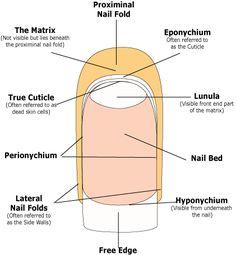DIY manicure and nail care! – – – – DIY manicure and nail care! Nail Care Tips, Nail Tips, Nail Ideas, Fancy Nails, Diy Nails, Matte Nails, Nail Tech School, School Nails, Nail Courses