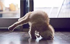 Yoga cat via https://www.facebook.com/CatsAndDogsBilder