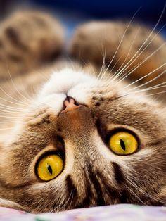 18++ Hewan kucing lucu dan imut terbaru