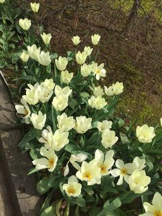 #flowers #springflowers #spring #march #springtime #springmood