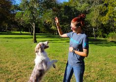 Teaching your canine how to respond appropriately based on specific commands is one of the best ways to take control over their behavior in the home and outdoors.