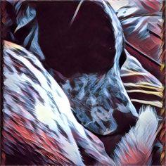 Oreo portrait