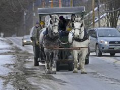 Horse-drawn garbage pick-up and recycling service in Bristol, Vermont.