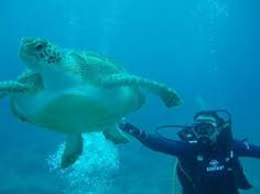Image result for tenerife diving