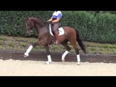 www.sporthorses-online.com 2003 top Dressage gelding for sale