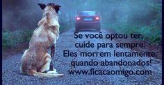 Um blog que visa a conscientização, libertação e adoção de animais. Fica Cãomigo = Adote um anjo com asas nas orelhas!