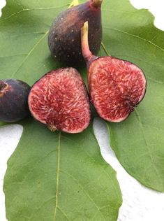 Col de Dama Noir Fig Varieties, Gardens, Tasty, Organic, Vegetables, Hair Styles, Figs, Container Gardening, Lady