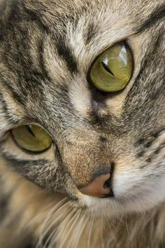 island-of-silence.com ᘠ le chat the cat katz