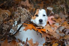 Lost in leaves by Heavenly Pet Photography  / 500px