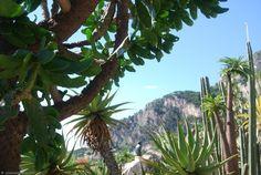 ./galeries/g1/cactus_monaco_jardin_exotique_15.jpg