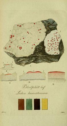 Svenska lafvarnas färghistoria Stockholm :Tryckt hos C. Delén,1805-[1809] biodiversitylibrary.org/page/13683617