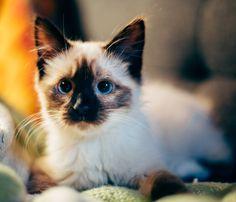 Borsa e Accessori a Forma di Gatto: 15 Proposte Da Regalare e Regalarsi