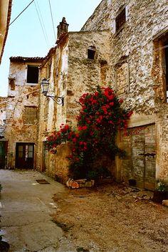 Red roses - Vodnjan, Istarska