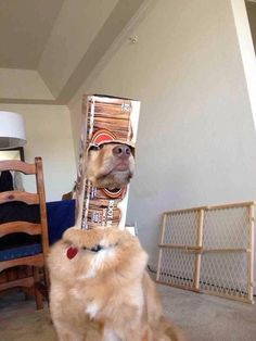 When this dog got stuck in the root beer case and tried pretending like nothing happened. | The 61 Most Awkward Moments In The History Of Dogs