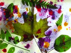 Wax paper and leaves, flowers, and plants!