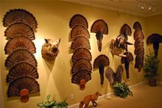 Turkey Hunting Trophy Room http://riflescopescenter.com/category/hawke-riflescope-reviews/