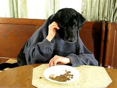 Black Labrador Retriever at Kitchen Table-Silly Dog -- some people have too much time on their hands.