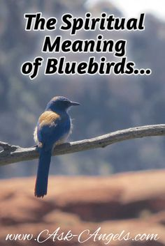 Bluebirds are symbolic of the angelic realm. Their meaning one of happiness grace and delight. And seeing bluebirds? A reminder to sing your unique song...  Learn more about bluebird symbolism in my newest post on Ask-Angels.com   #bluebirds #spiritual #meaning