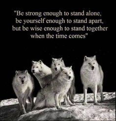 Native American Wolf Quotes Tags: native, teaching, wolf