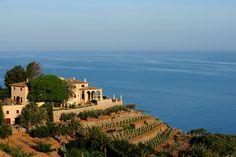 Terrazas de viñedos en Banyalbufar (Mallorca)