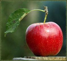 . Das Verhängnis kam mit dem Apfel Nicht nur mit gesundem Inneren, sondern auch mit ästhetischem Äußeren: der Apfel. Der Apfel gilt als ausgesprochen gesundes Nahrungsmittel, wobei mancher, der kräftig hinein beißt, von seiner uralten Rolle in Mythen und Märchen vielleicht nichts mehr weiß. Adam und Eva wurde der Weg aus dem Paradies gewiesen, weil sie sich an di... Mehr anzeigen — hier: Neverland. Fruits And Vegetables Pictures, Vegetable Pictures, Fresh Fruits And Vegetables, Fruit And Veg, Plant Painting, Fruit Painting, Apple Painting, Fruit Photography, Still Life Photography