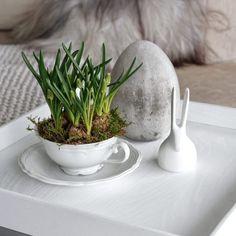 Muscari in der Suppenschüssel! Und Ihr so? Steht die Osterdeko schon? #happysunday #osterdeko #easter #ostern #hase #frühling