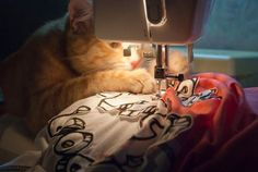 Kitty is Quite the Seamstress