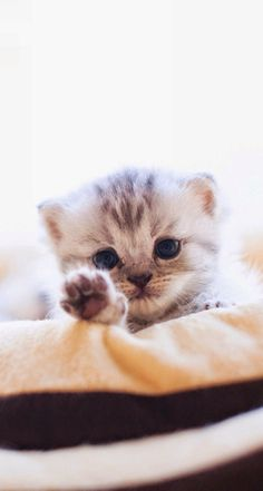 """talk to da paw"""