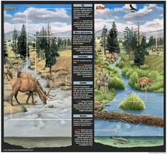 Yellowstone National Park before and after