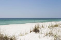 Sea oats and sand dunes in Panama City Beach, Florida lead to beautiful vacation days! www.sunspotrealty.com