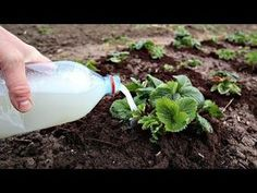 Hydroponic Grow Systems, Hydroponics, Lawn And Garden, Home And Garden, Vegetable Garden Design, Small Farm, Easter Wreaths, Diet And Nutrition, Dream Garden